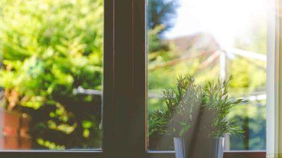 light shining through window on a plant